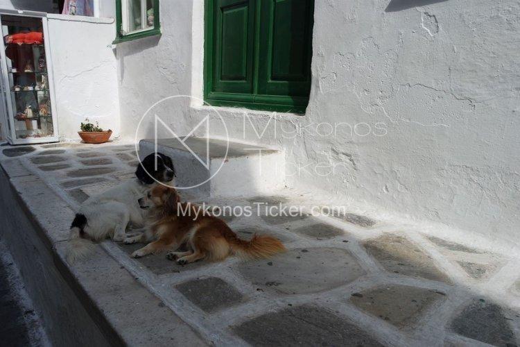 Domestic Animals: Τσουχτερά πρόστιμα για Βασανισμό και Θανάτωση, στο Νομοσχέδιο για ζώα συντροφιάς [Έγγραφο]