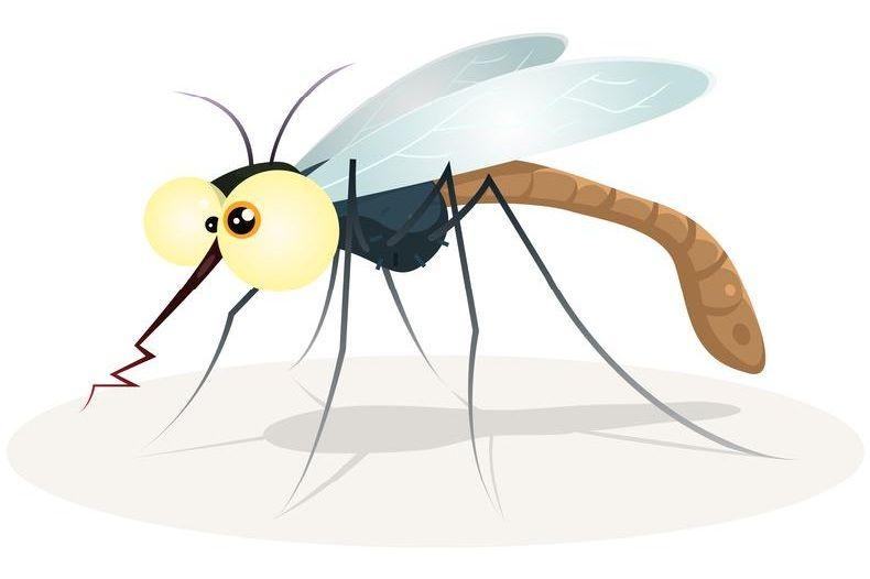 , Οι 2 απλοί λόγοι που τα κουνούπια τσιμπάνε κυρίως… εμένα!! [Video]